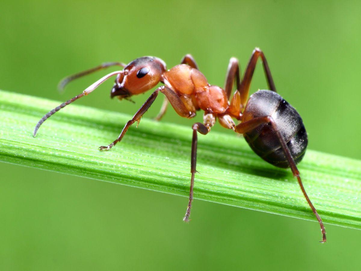 Astuces Naturelles Pour Se Débarrasser Des Fourmis les meilleures méthodes pour se débarrasser des fourmis