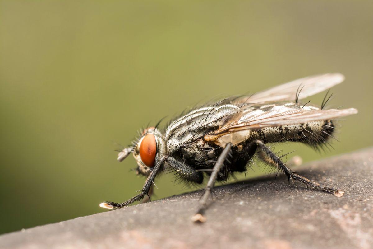 Faire Fuir Les Fourmis quelles sont les pièges et répulsifs anti-mouches pour s'en